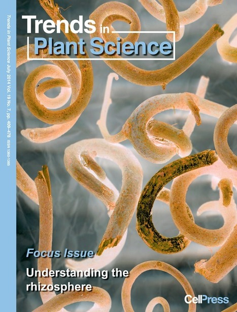 Understanding the rhizosphere better ... Trends in Plant Science | Plant-Microbe | Scoop.it