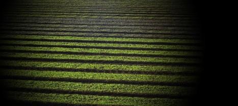 Rural Auckland - The Auckland Plan | Auckland Council | Venice | Scoop.it