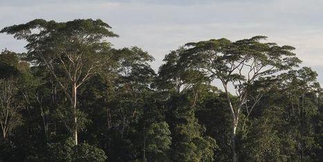 La forêt amazonienne ne résistera pas à un réchauffement climatique important | Biodiversité & Relations Homme - Nature - Environnement : Un Scoop.it du Muséum de Toulouse | Scoop.it