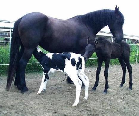 Got milk?   Equine Photography   Scoop.it