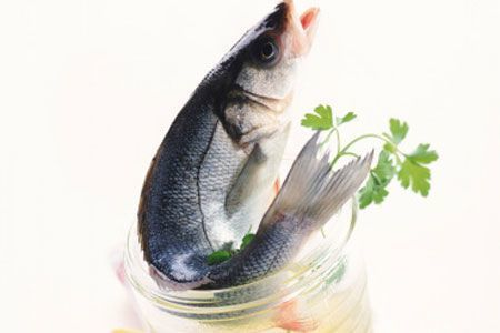 Fish oil good for brain health - Times of India | Earth Citizens Perspective | Scoop.it