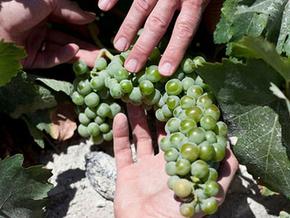 Authentic Greek Recipes: Greek Wines Becoming More Popular?   Greek cuisine   Scoop.it