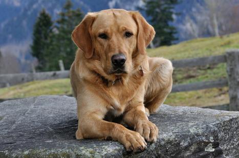 La historia de Nuco el perro guía. Tu los puedes educar en casa. | Enriquecimiento ambiental en animales en cautividad y mascotas. | Scoop.it