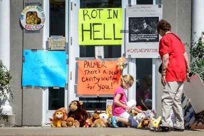 U.S. officials can't find Cecil the lion's killer as Zimbabwe calls for his extradition | Nature Animals humankind | Scoop.it