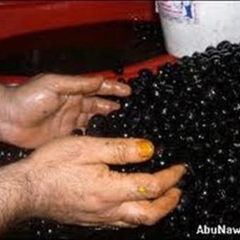 البلد: خبراء تغذية: الزيتون الأسود مفيد لسلامة القلب | تغذية | Scoop.it