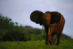 Wild Elephants Live Longer Than Their Zoo Counterparts | sloths | Scoop.it