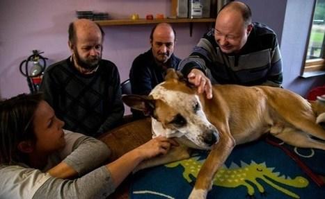 L'Avenir   Le chien, un «thérapeute» au poil   L'actualité de l'Université de Liège (ULg)   Scoop.it