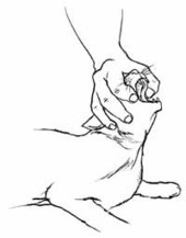 How to Save a Choking Cat: Tips and Guidelines: Cat Injury Treatments: Animal Planet | kittys | Scoop.it