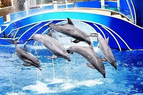 Sea World vacation in san diego - Newhotelus.Com | destination | Scoop.it
