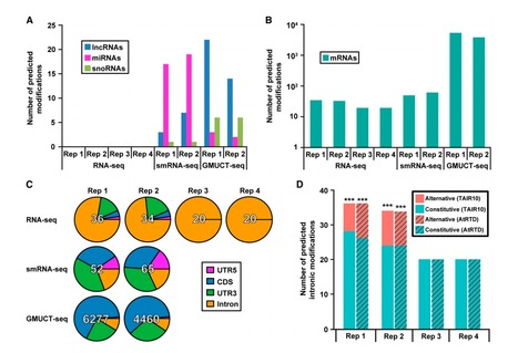 Chemical Modifications Mark Alternatively Spliced and Uncapped Messenger RNAs in Arabidopsis | Emerging Research in Plant Cell Biology | Scoop.it