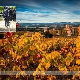 'Torres began a quest to rescue Catalan grapes from various points on the spectrum between obscurity and near-extinction' | Vitabella Wine Daily Gossip | Scoop.it