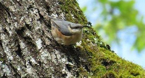 Découverte des oiseaux | Actualité touristique Fumel-Vallée du Lot | Scoop.it