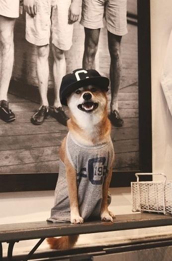 Conoce al perro con estilo que revoluciona las redes sociales - Tuteve.Tv | Educación & Social Media | Scoop.it