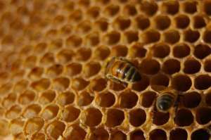Apiculture traditionnelle au Maroc : le rucher d'Inzerki | Ecotourisme au Maroc | Ecotourisme au Maroc | Scoop.it