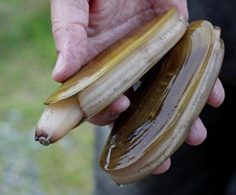 Razor Clam Wars: high seas battle of wits to stop illegal 'electro-fishing' (From Herald Scotland) | All about water, the oceans, environmental issues | Scoop.it