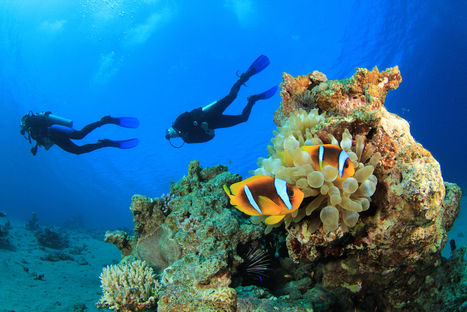 Scuba Diving Etiquette: How To Avoid Putting Your Dive Boot In Your Mouth | All about water, the oceans, environmental issues | Scoop.it