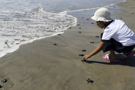 Mexico jumps on the 'big reserve' trend of ocean conservation | Sustain Our Earth | Scoop.it