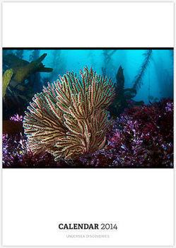 Undersea Discoveries by Greg Amptman   Undersea Discoveries   Scoop.it
