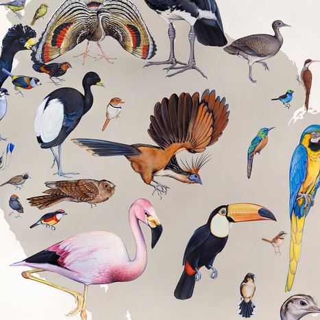 Wall of Birds - Evolution and Diversity | Data visualization | Scoop.it