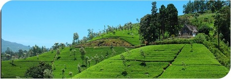 08 Nights / 09 Days Tour Programme : Airwing Tours – Sri Lanka | Sri Lanka Tour Packages | Scoop.it