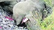 Plastic waste from Sabarimala devotees kills wild elephant in Kerala forest | Nature Animals humankind | Scoop.it