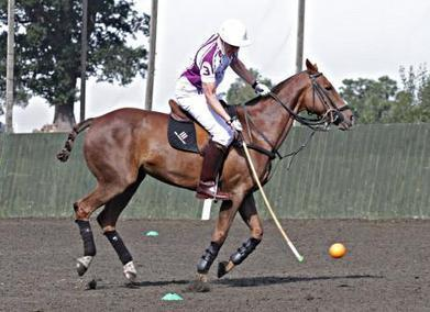 Cool Hooves Polo - Private Lessons | Love eXcellence | Experiences | Luxury | Scoop.it