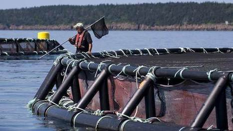 Another pristine bay hocked for fish farming | responsibleaquaculture | Nova Scotia Fishing | Scoop.it