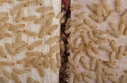 Easy Do It Yourself Termite Treatment Options | How To Get Rid Of Termite | Scoop.it