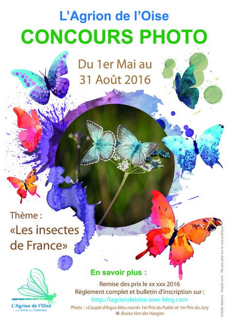 3e édition du Concours Photo de L'Agrion de l'Oise   Variétés entomologiques   Scoop.it