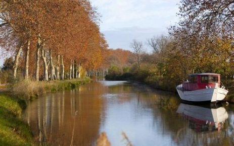 Canal du Midi : un traitement pour sauver les platanes - Le Parisien | Bio3D | Scoop.it