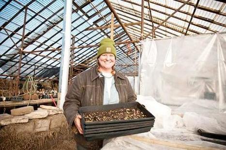 An 'artist co-op' for urban farmers - MinnPost.com | Green Gnome Garden News | Scoop.it