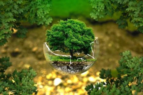 ideal environmental program | Travel Across the Border | Scoop.it