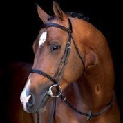 Best Quality Equine Horse Tack Supplies For Sale | Shopping | Scoop.it