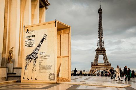 Le parc zoologique de Paris rouvre ses portes au public | L'economie solidaire d'utilite publique | Scoop.it