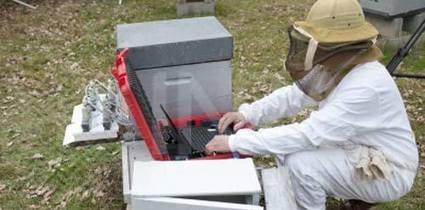 INRA : le résultat étonnant d'une étude sur la disparition des abeilles | EntomoScience | Scoop.it