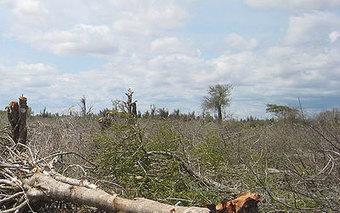100.000 Hectares de forêts iraniennes détruits chaque année | Confidences Canopéennes | Scoop.it