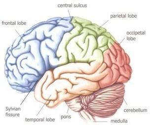Interview d'une étudiante : La neuropsychologie   Les études de ...   Emploi psychologue   Scoop.it