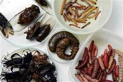 Bugs: They do grow on trees | Entomophagy: Edible Insects and the Future of Food | Scoop.it
