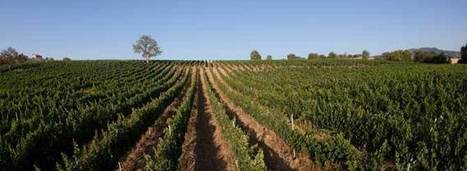 Uncovering Value in the Wines of #Tuscany | Vitabella Wine Daily Gossip | Scoop.it