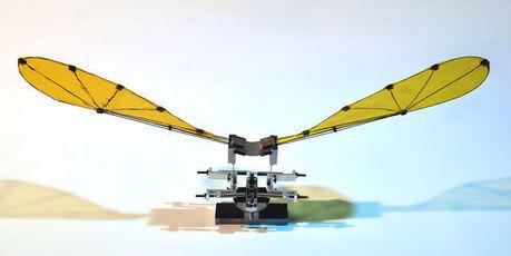 De la libellule au microdrone : comment les insectes nous apprennent à voler | Mes passions natures | Scoop.it