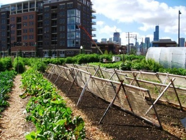 Feeding the Cities: Is Urban Agriculture the Future of Food Security? | Urban Gardening | Scoop.it