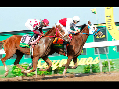 Pick-9 promises big payout - Jamaica Gleaner | horse slaughter | Scoop.it