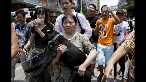 China city holds dog-meat eating festival despite protests | Nature Animals humankind | Scoop.it