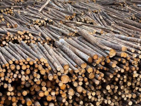 North Dakota board puts Timberland Investment Resources on watch | Timberland Investment | Scoop.it