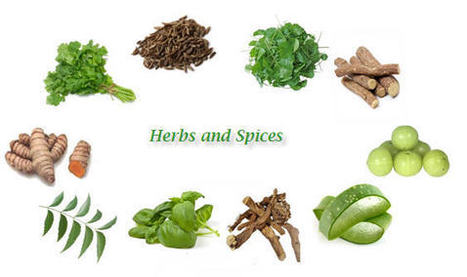 Giirvani - Ayurvedic Remedies | 10 Common Herbs and Spices Used In Ayurveda | phytopharmaceuticals, pollinators, biodiversity | Scoop.it