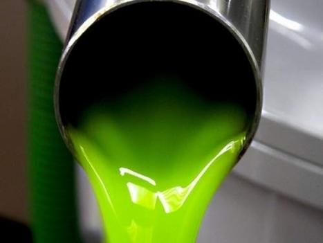 Quando l'olio extra vergine di oliva sa di buono - TeatroNaturale.It   Ovunque e sempre con voi   Scoop.it