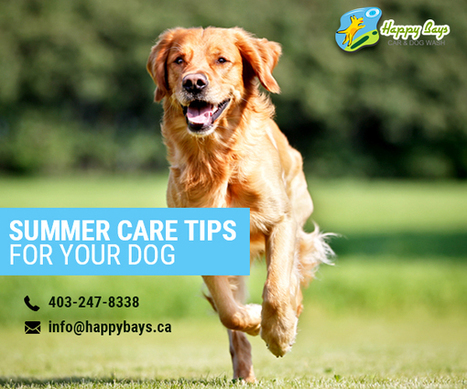 Check Out These Summer Care Tips for Your Dog | Know about Your Car Wash Services in Calgary from Happy Bays | Scoop.it
