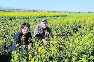 Beet western growing threat - Agriculture - Agribusiness - General News - Stock Journal   Beet western yellows virus   Scoop.it