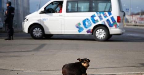 Sochi Officials Order Killing of Stray Dogs for Olympics | sochi | Scoop.it