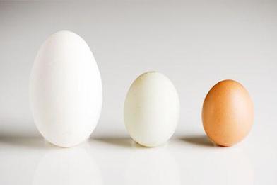 Que tipos de huevos existen - Canal Hogar MAPFRE   Nutrition Today   Scoop.it